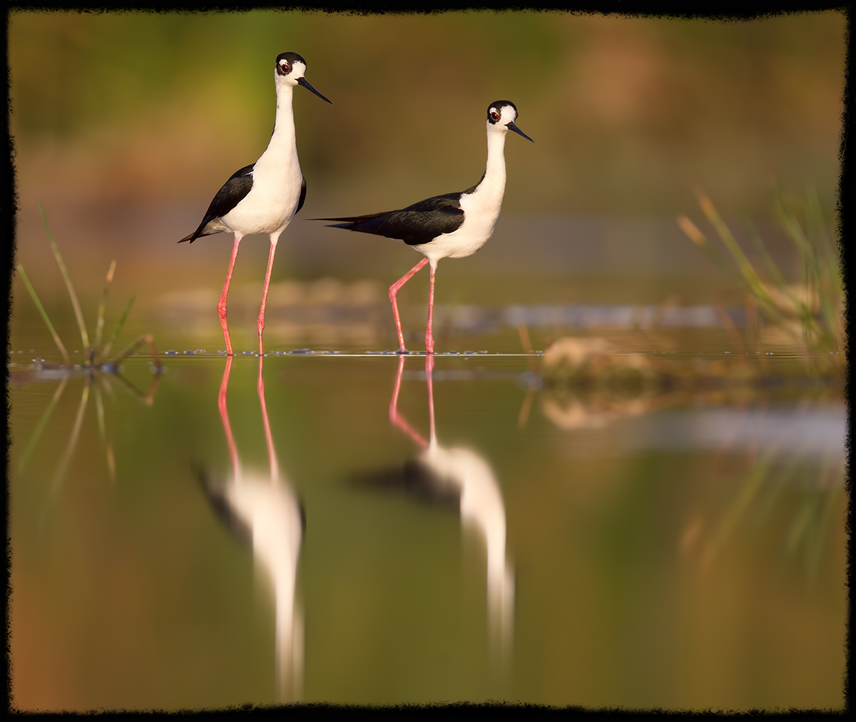 Mated Stilts